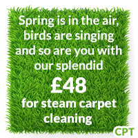 domestic carpet cleaners